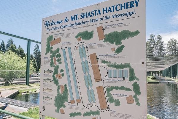 Mount Shasta Hatchery - Mount Shasta Travel Guide | justonecookbook.com