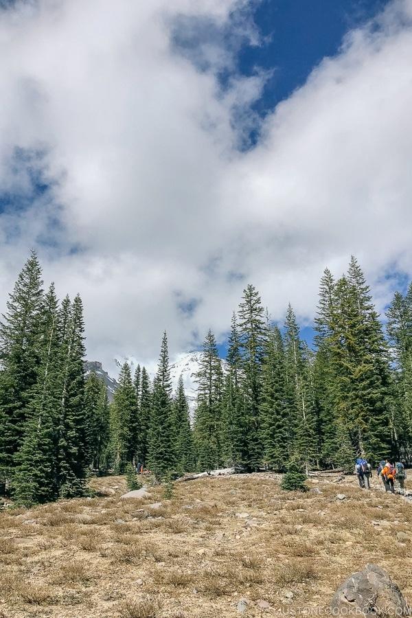 Mount Shasta Bunny Flat Trail - Mount Shasta Travel Guide | justonecookbook.com