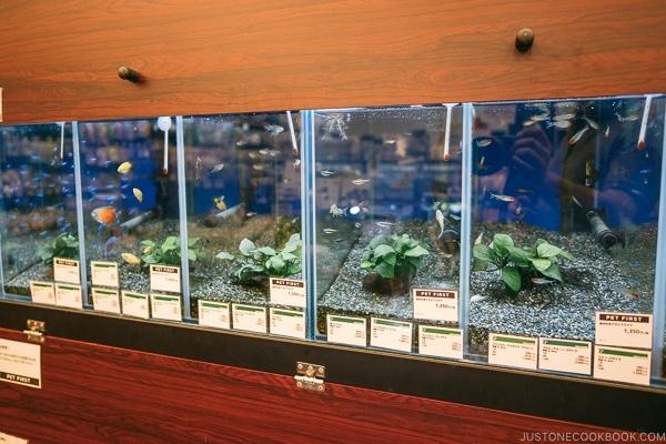 pet fish at Tokyu Hands - Tokyo Shibuya Travel Guide | www.justonecookbook.com