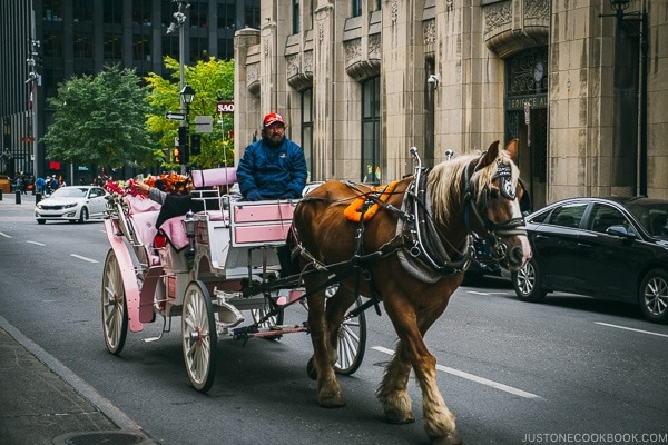 horse and carriage - Montreal Travel Guide | www.justonecookbook.com