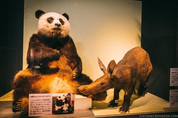 stuffed panda - Tokyo National Museum of Nature and Science Guide | www.justonecookbook.com