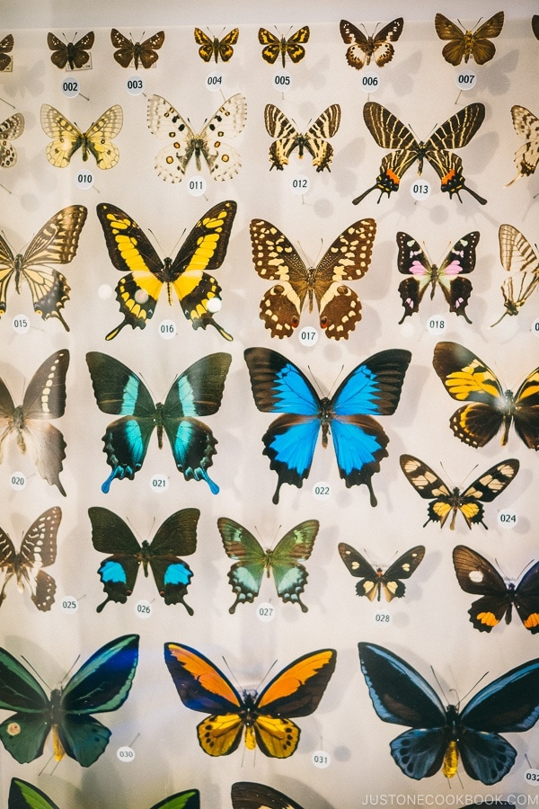 butterfly collection - Tokyo National Museum of Nature and Science Guide | www.justonecookbook.com