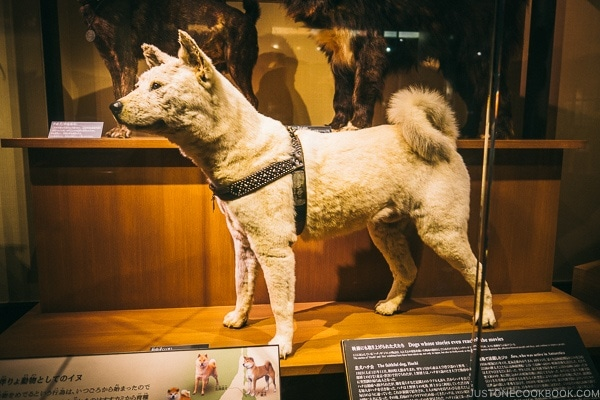 Hachiko - Tokyo National Museum of Nature and Science Guide | www.justonecookbook.com