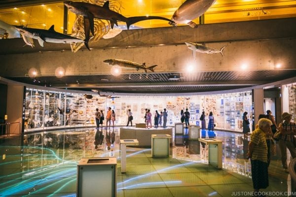 Tokyo National Museum of Nature and Science Guide | www.justonecookbook.com