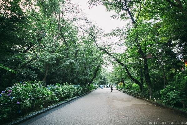 pathway in Ueno Park - Tokyo Ueno Travel Guide | www.justonecookbook.com