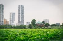 Tokyo Ueno Travel Guide 上野