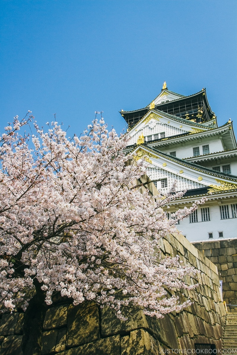 cherry blossom at osaka castle | www.justonecookbook.com