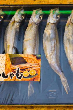 shishamo smelt fish