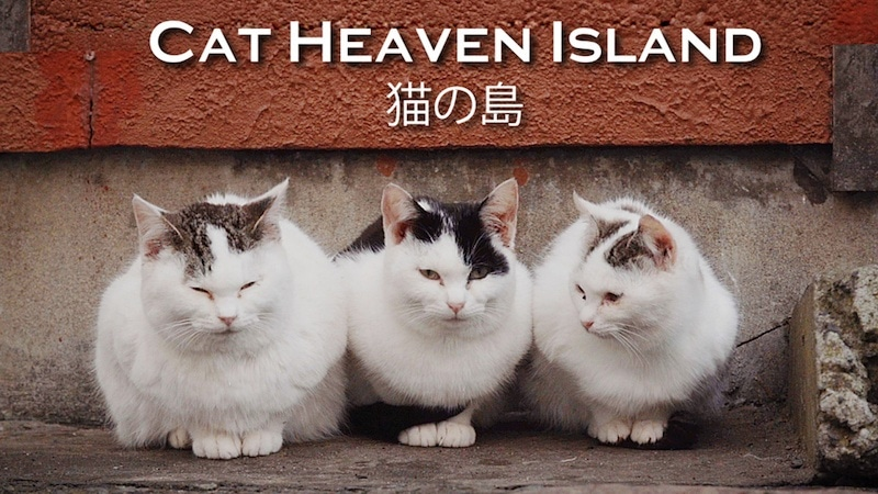 Cat Heaven Island documentary about an island in Japan_Japanese Films Recommendations