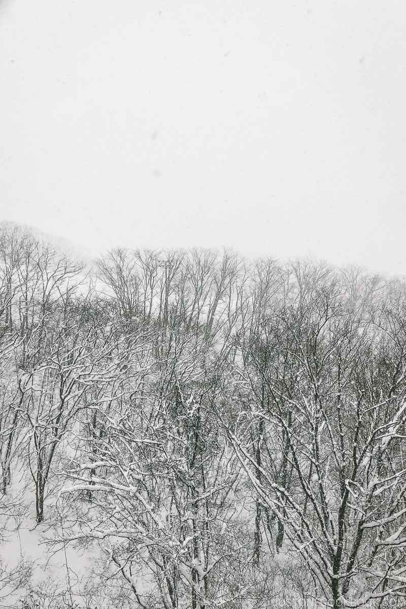 snow falling on trees at Tsugaike Ski Resort - Hakuba Travel and Ski Guide | www.justonecookbook.com