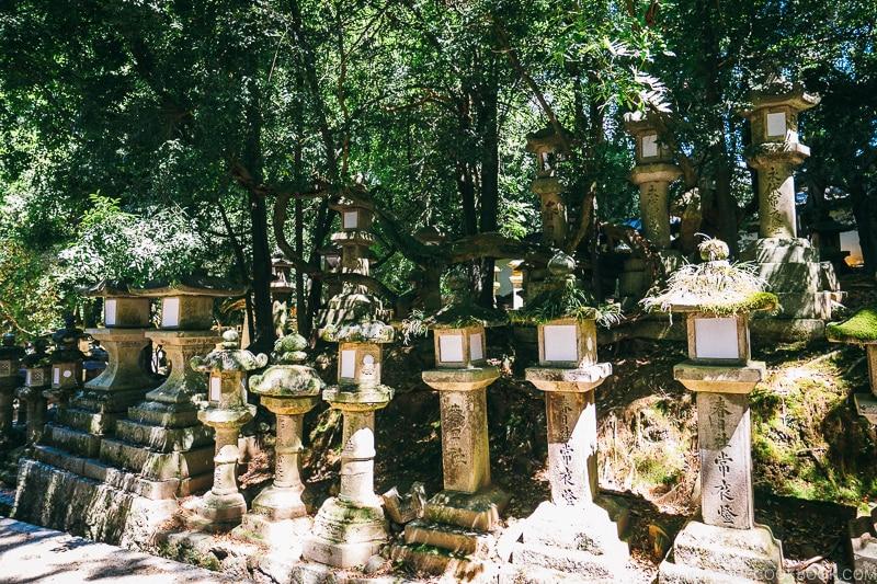 lanterns along the walkway | Nara Guide: Kasuga-taisha | www.justonecookbook.com
