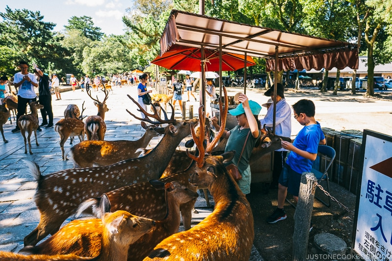vendors selling deer feed - Nara Guide: Todaiji | www.justonecookbook.com