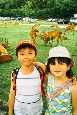 children in front of deer in Nara Park - Nara Guide: Things to do in Nara | www.justonecookbook.com