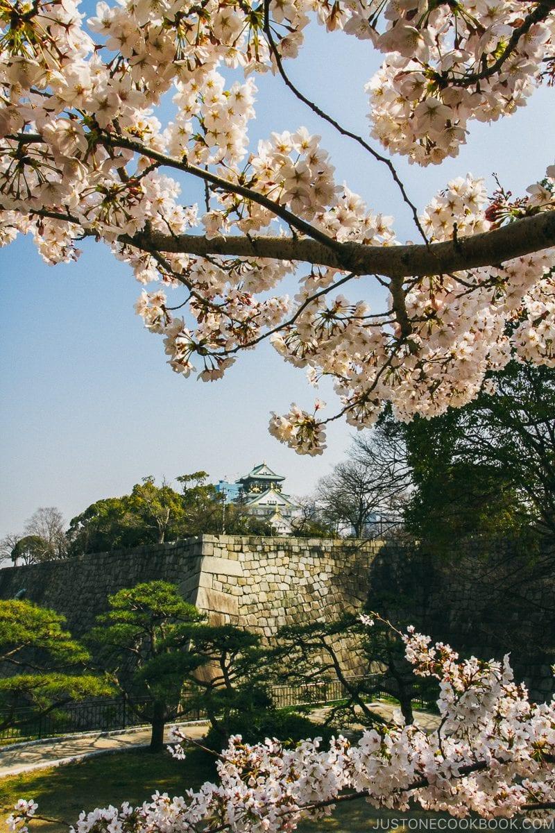 Osaka Castle wall during cherry blossom season - Osaka Guide: Osaka Castle| www.justonecookbook.com