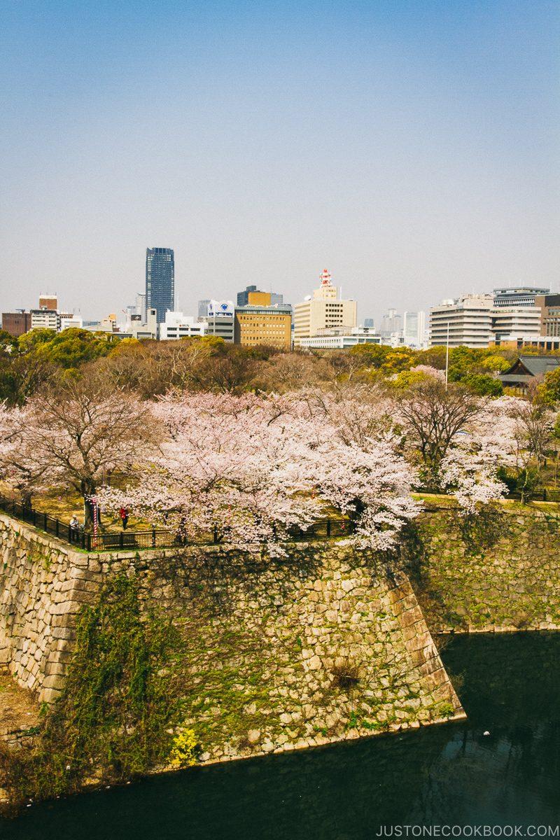 Osaka Castle wall and moat during cherry blossom - Osaka Guide: Osaka Castle| www.justonecookbook.com