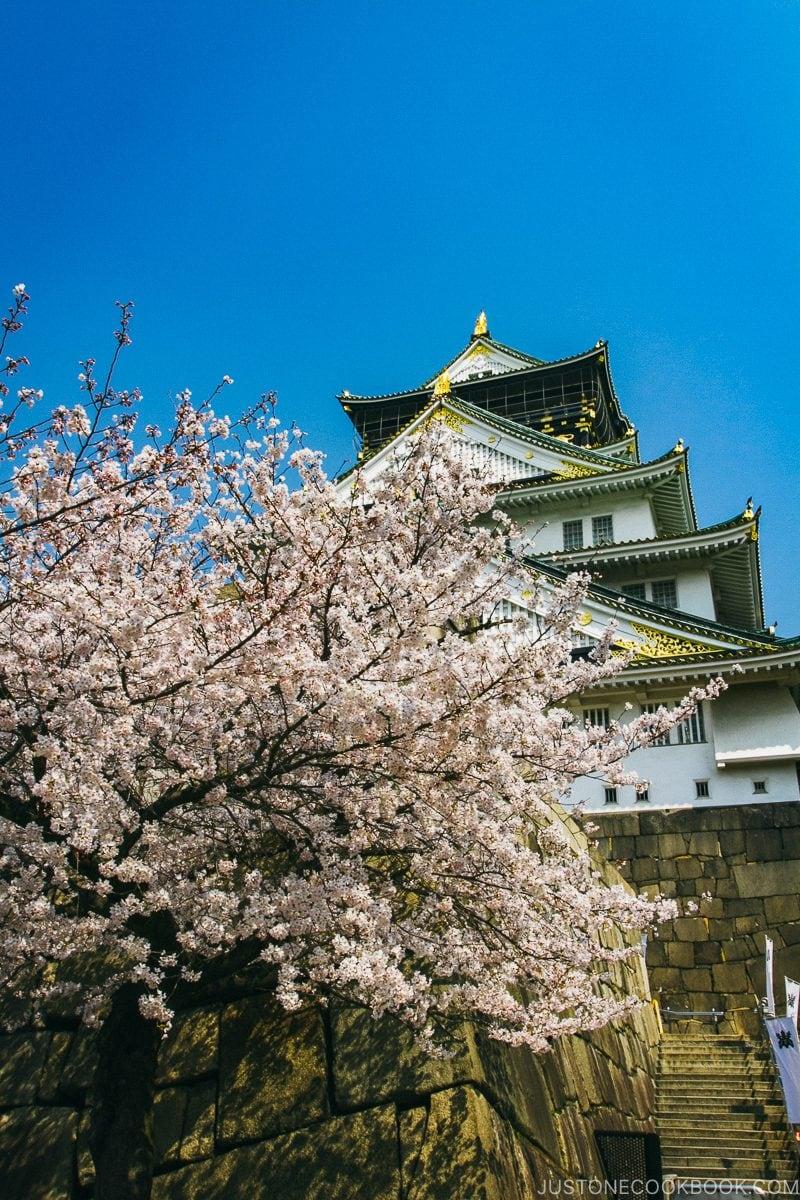 cherry blossom in front of Osaka Castle - Osaka Guide: Osaka Castle| www.justonecookbook.com