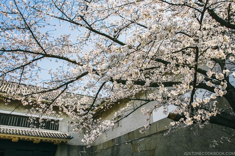 cherry blossom at Otemon Gate - Osaka Guide: Osaka Castle| www.justonecookbook.com