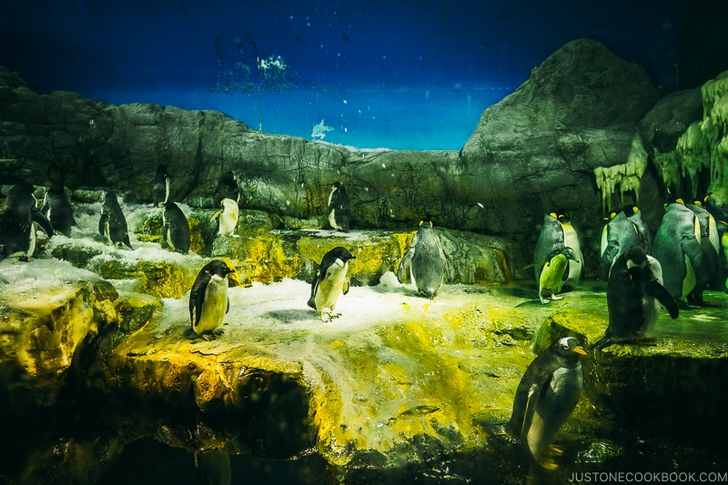 penguins at Kaiyukan - Osaka Guide: Tempozan Harbor Village | www.justonecookbook.com