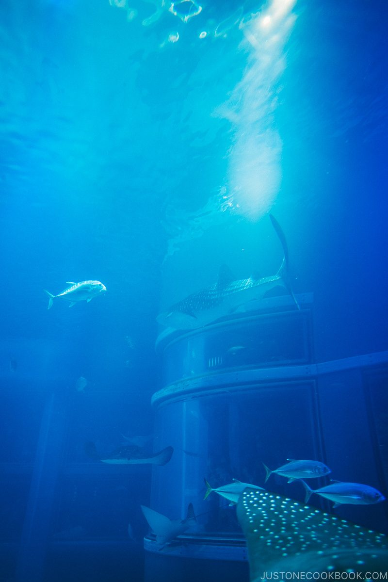 whale shark, tuna, and rays inside Pacific Ocean tank - Osaka Guide: Tempozan Harbor Village | www.justonecookbook.com