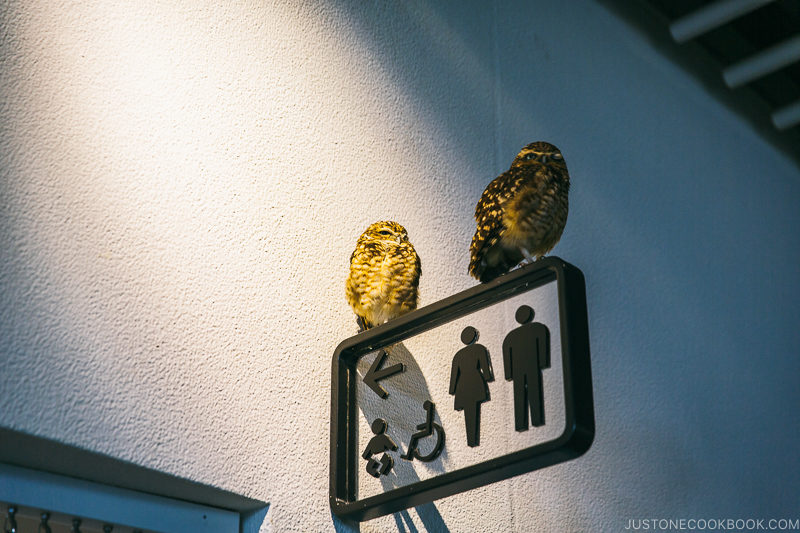 owls perched on bathroom sign - Osaka Guide: Expocity | www.justonecookbook.com