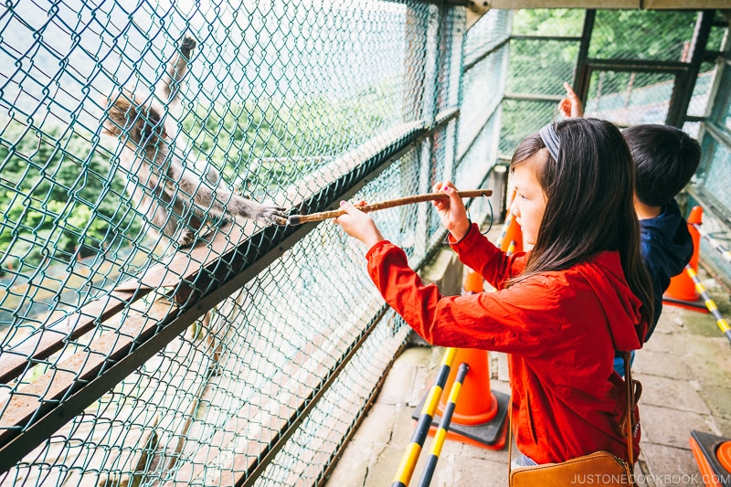 children feeding monkeys at Kinugawa onsen ropeway - Nikko Travel Guide : Kinugawa Onsen | www.justonecookbook.com