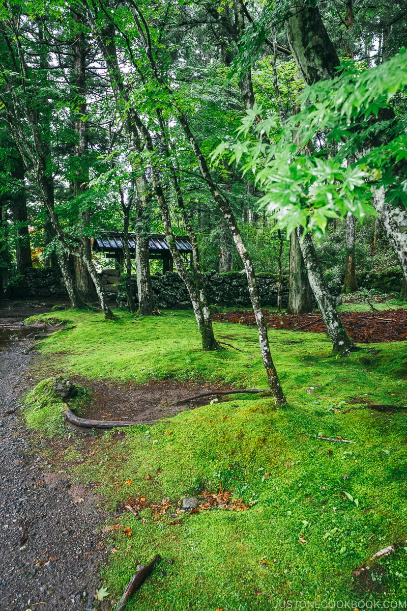 beautiful moss and trees near Kanmangafuchi Abyss 憾満ヶ淵- Places to Visit and Things to do in Nikko | www.justonecookbook.com
