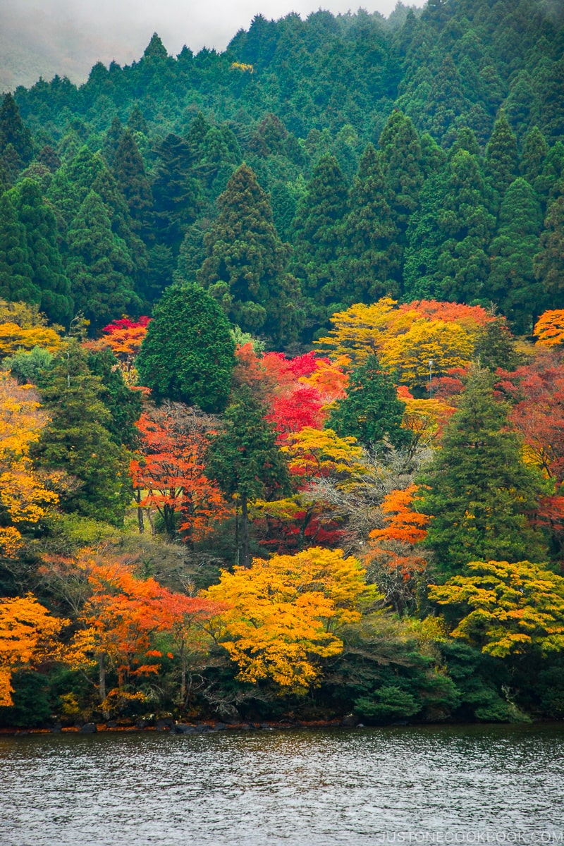 leaves changing color in Japan - Insiders' Guide for For First Time Visitors to Japan | www.justonecookbook.com