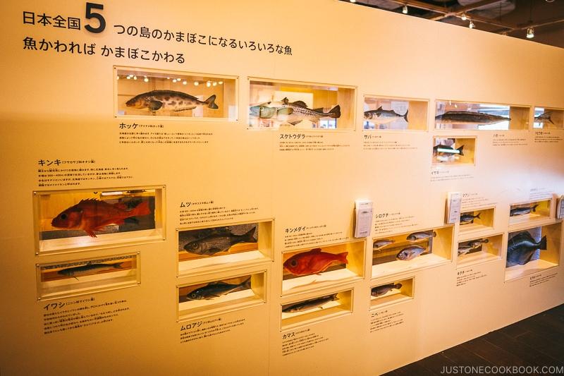 wall with types of fish used to make kamaboko - Make Fish Cakes at Suzuhiro Kamaboko Museum | www.justonecookbook.com