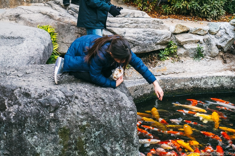 Children feeding koi fish at Hotel Sekifu - Celebrate New Year at Isawa Onsen in Yamanishi | www.justonecookbook.com