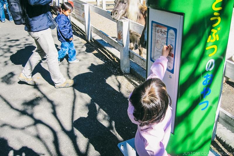 child buying animal feed from dispenser - Things to do around Lake Kawaguchi   www.justonecookbook.com