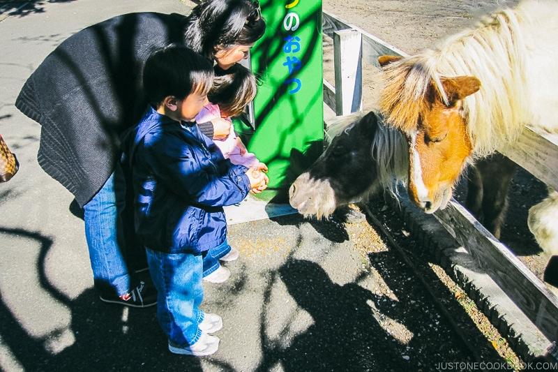 mom and children feeding pony - Things to do around Lake Kawaguchi   www.justonecookbook.com