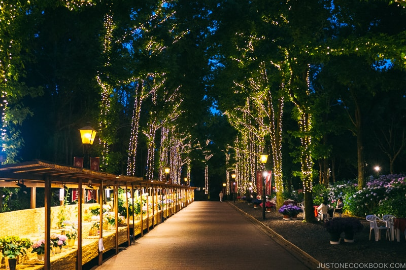 lite up tree lined the walking path at Huis Ten Bosch