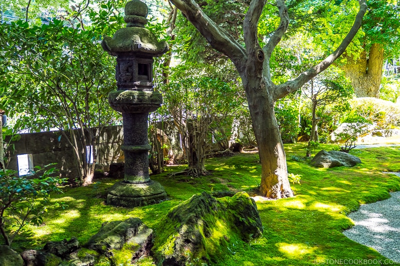 moss covered garden with stone lantern and trees