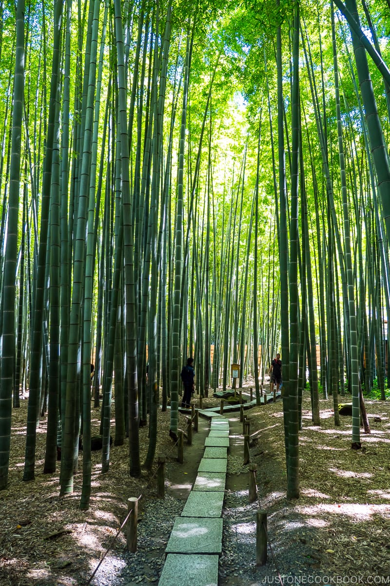 bamboo forest with a stone walkway