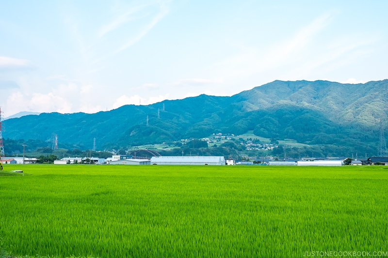 mountain scenery with rice fields