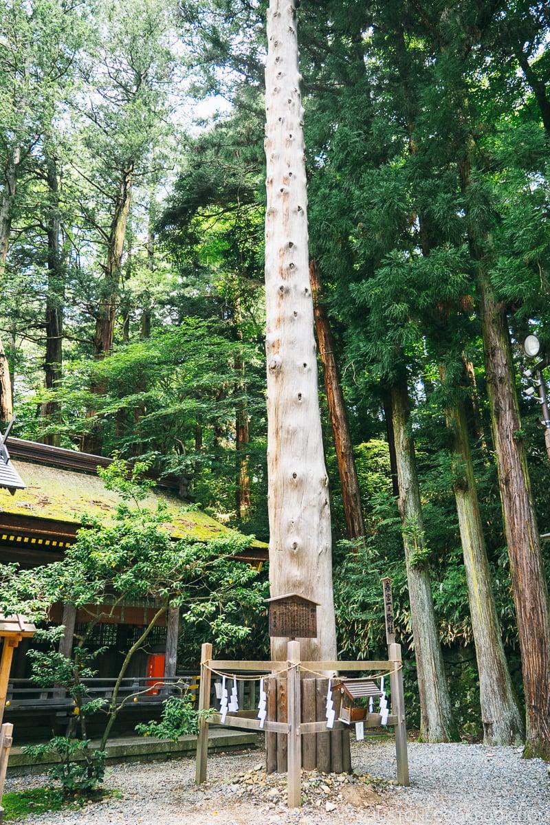 one of the main wood pillars at Harumiya
