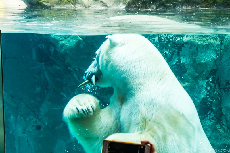 polar bear eating fish in the water behind the glass