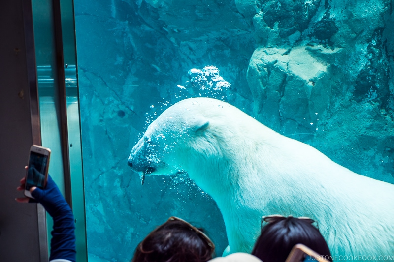 polar swimming in water behind glass with a fish inside its mouth