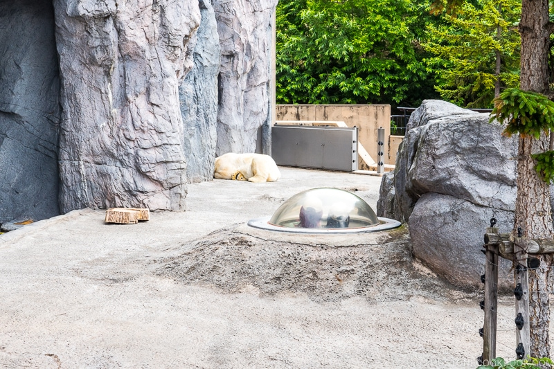 polar bear sleeping next to a cave outside in the sun