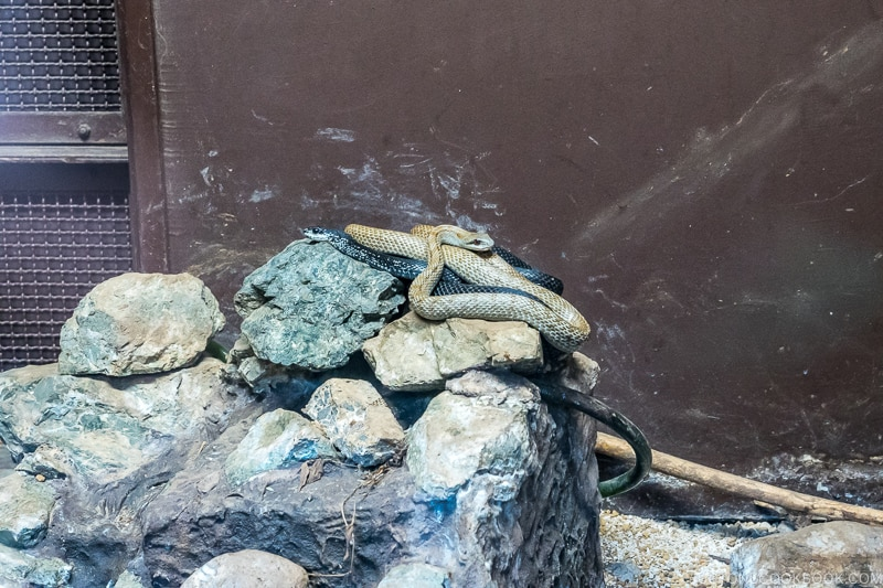 snakes on top of rocks