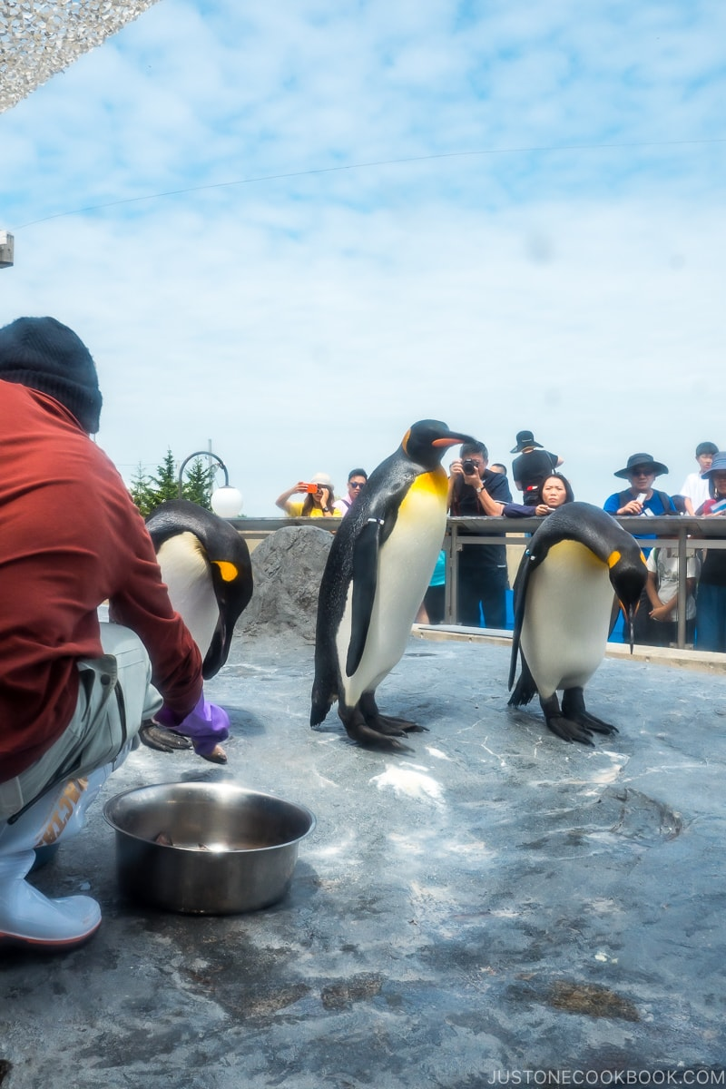 visitors watching penguins being fed