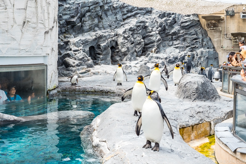 visitors watching penguins from behind a glass