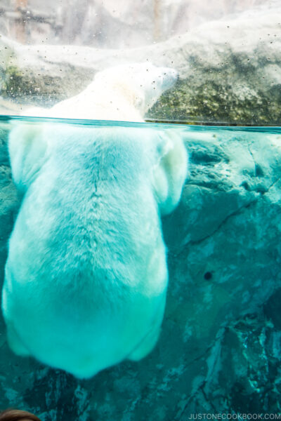 polar bear holding onto a rock behind a glass