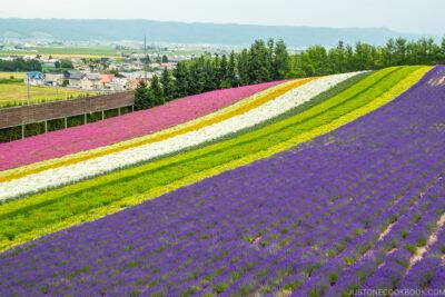 flower fields at Farm Tomita