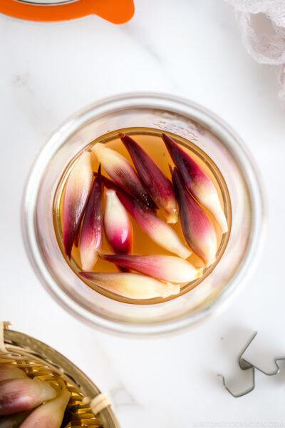 A Weck jar containing Japanese ginger sweet pickles (Myoga Amazuzuke).